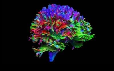 Les neurosciences : une aide précieuse à l'éducation !