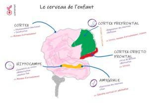 neuroscience en education